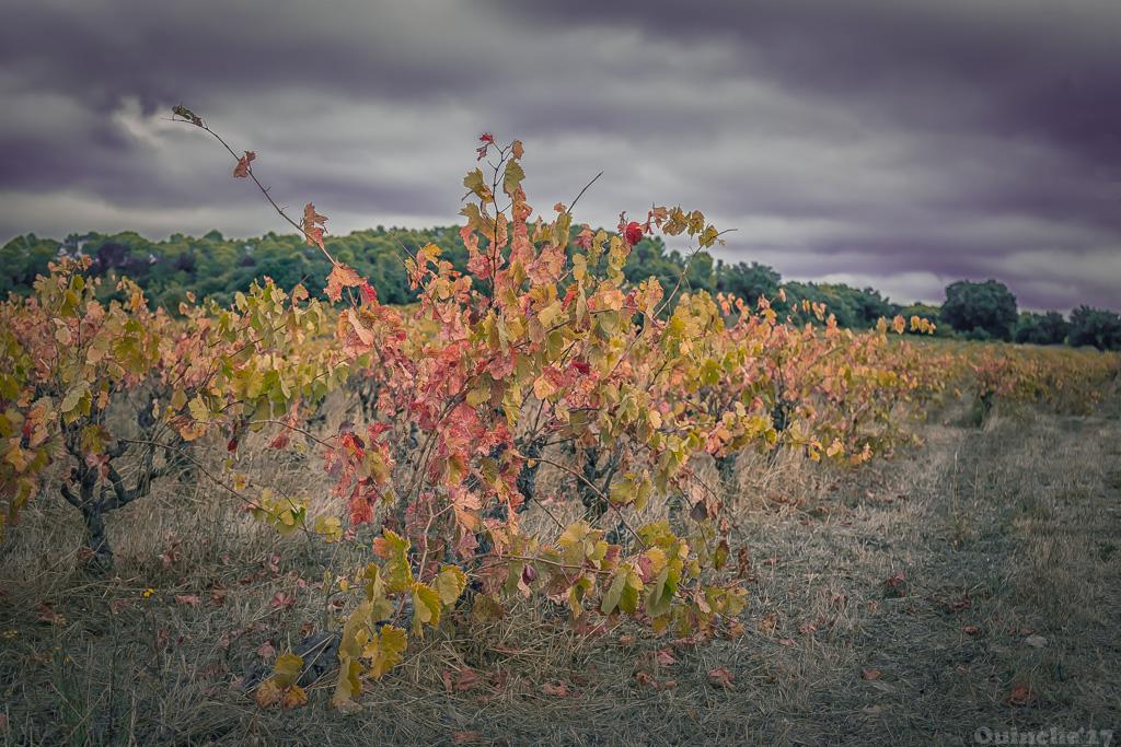 [Défi 52] Thème semaine n°41: L'automne