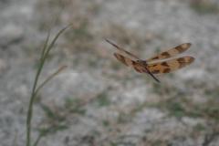 [Défi 52] Thème semaine n°27: Insecte en vol