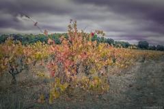 [Défi 52] Thème semaine n°40: L'automne