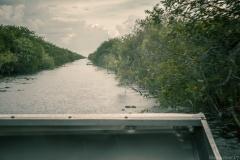 Everglades_-13