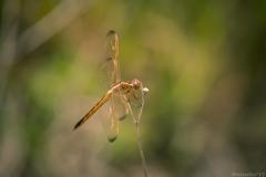 Everglades_-2
