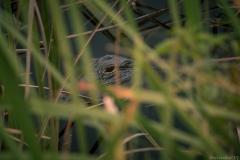 Everglades_-24