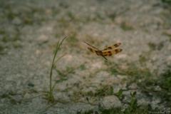 Everglades_-5