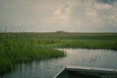 Everglades_-7