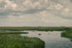 Everglades_-8