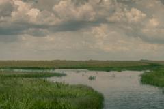 Everglades_-9