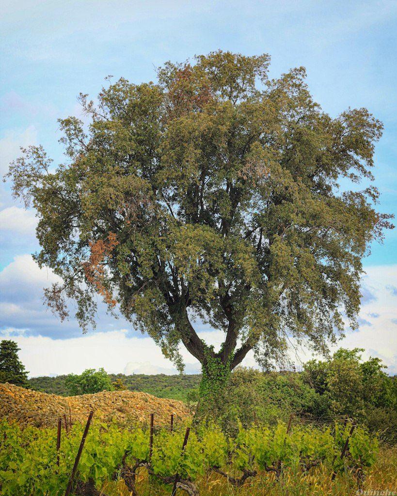 KIVA le faire n°11 : Un arbre