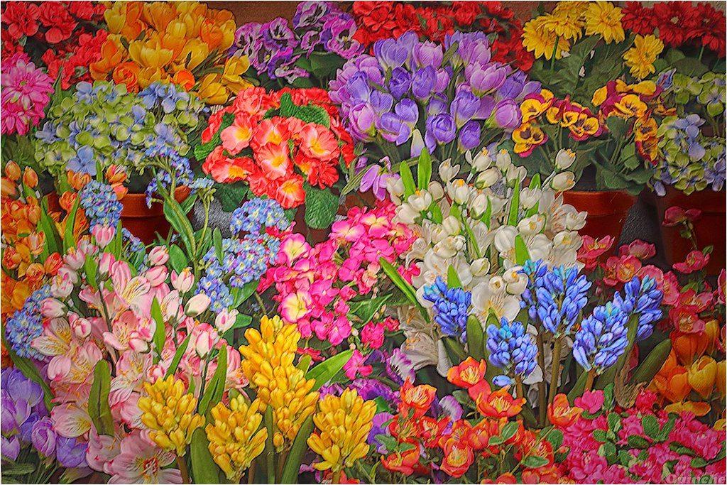 KIVA le faire n°9 : Dites le avec des fleurs. Candidat 1