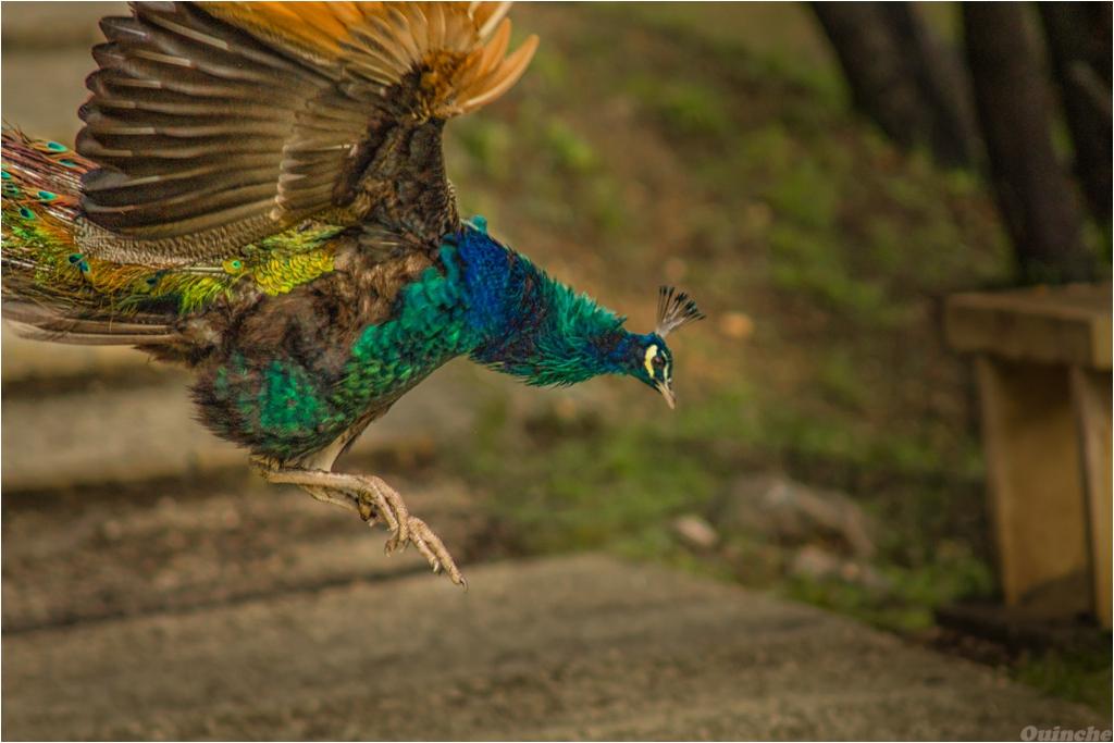 [Défi 52] Thème Semaine n°4: Oiseaux & Rapaces