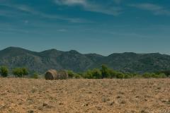 [Défi 52] Thème semaine n°30: Balots de paille dans le paysage