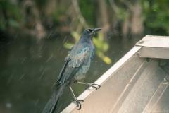 Everglades_-23