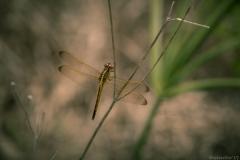 Everglades_
