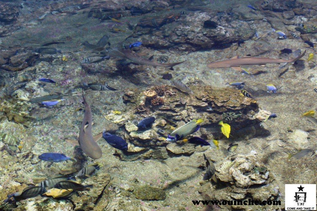 Récif, poisson chirurgien et requin à pointes noires